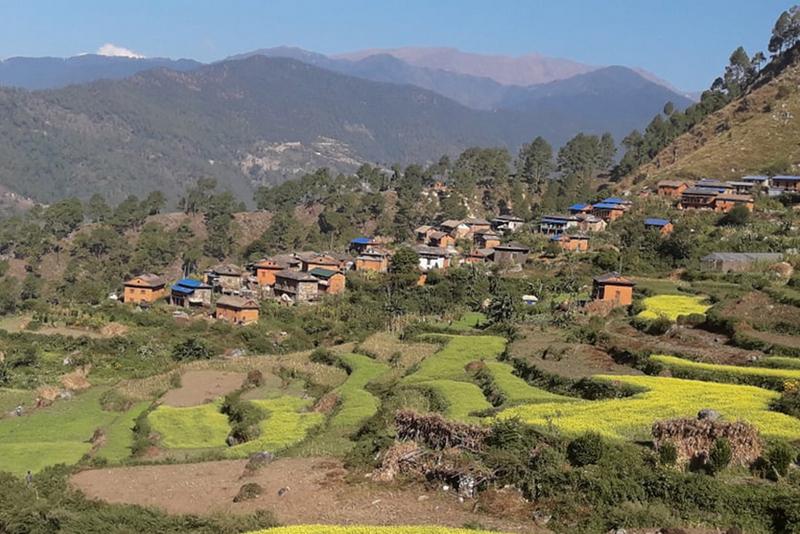 दमदाला गाउँभरि ज्वरोका बिरामी, स्थानीय तह बेखबर